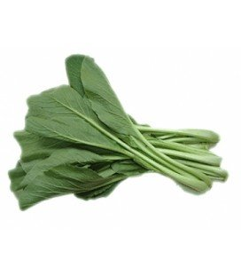 Moutarde chinoise verte